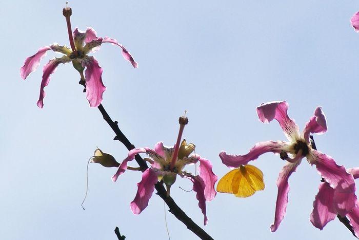 Flowers For My Friends Macroclique Landscapes Of Brasil NEM Painterly