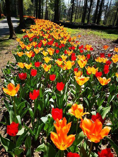 Close-up of orange flowering plants in park