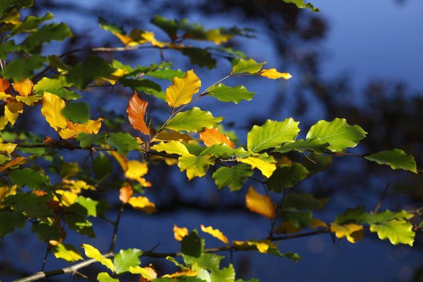 Autumn,Germany Autumn Autumn Colors Herbststimmung Nature Tree Trees Autumn🍁🍁🍁 Farbenspiel Herbstblatt Herbstfarben Malerisch Nature_collection Park Trees And Nature