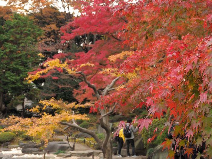2018/12/03 Mon ☀ おはよ〜ございます。 今週もマイペースで頑張りましょう! #ファインダー越しの私の世界 #ファインダーは私のキャンパス #オリンパス #OLYMPUS #E_M5Mark2 #OM_D #ミラーレス #Photograph #Photography #カメラ日和 #お写んぽ #スナップ写真 #Tokyo #beautiful #カメラのある生活 #あなたに見せたい写真がある #写真は心のシャッター #恋するカメラ #はなまっぷ #秋は駆け足 #旧古河庭園 ファインダー越しの私の世界 ファインダーは私のキャンパス オリンパス Olympus E_M5Mark2 Om_d ミラーレス Photograph Photography カメラ日和 お写んぽ スナップ写真 Tokyo Beautiful カメラのある生活 あなたに見せたい写真がある 写真は心のシャッター 恋するカメラ はなマップ 旧古河庭園 秋は駆け足 Tree Autumn Leaf Red Change