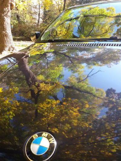 Autumn Colors Reflection on My BMW Bonnet Bmw Tree Trees TreePorn Tree_collection  Autumn Autumn Collection Naturelovers From My Point Of View Weekend Weekend Activities Nature Photography Nature Nature_collection Ilovephotography Taking Photos Mobilephotography Hanging Out Enjoying The View Natural Beauty EyeEm Gallery