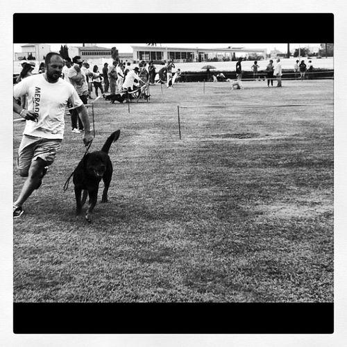 Hola @charoina :) Mira, un perro del infierno como los tuyos.