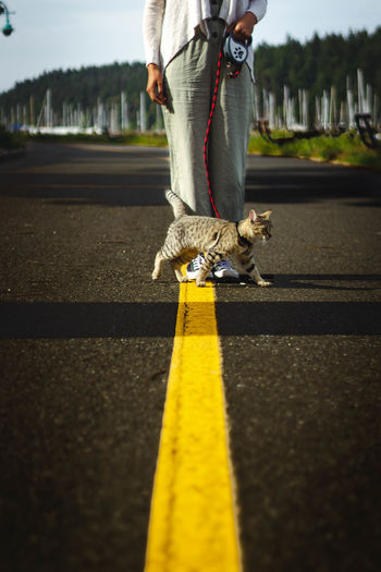 Low section of woman with cat on road