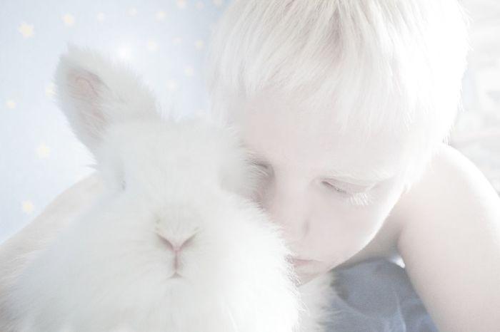 White Bunny  Albino Albinism