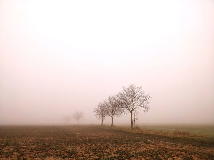Tree on field against sky during foggy weather