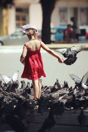 Girl standing amidst pigeons on road