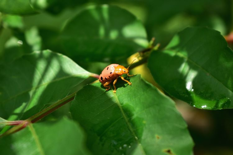 the lady and I (3/3) Environment Colorful Staring Looking At Camera Full Length Leaf Insect Ladybug Close-up Animal Themes Green Color Plant Habitat Scenery Relaxed Moments Relaxing Moments Atmospheric