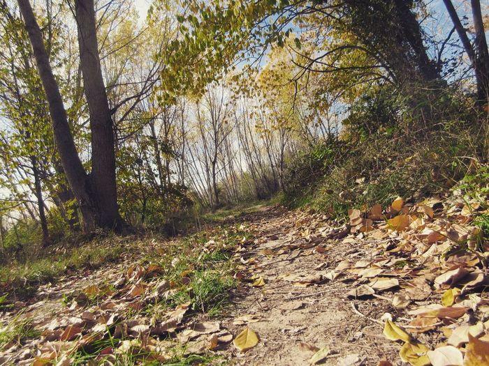 Camins Tree Caminos Tardor Otoño 🍁 Autumn Eyem Gallery Eyemphotography Otoño País De L'olivera Nature No People Tardor/Autumn El Comtat