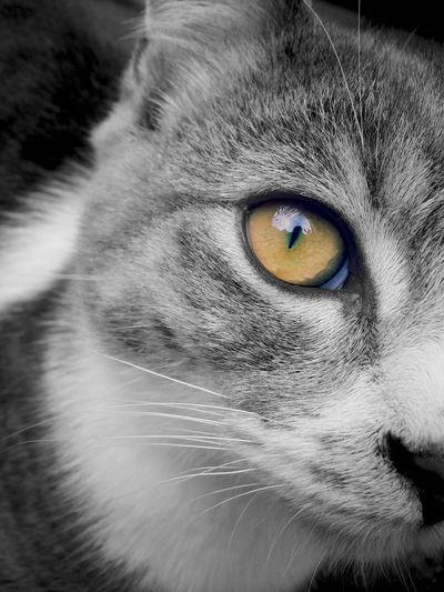 I Love My Cat ❤ Beauty Grey & White Beautiful Eyes Cats 🐱 Cat's Eye