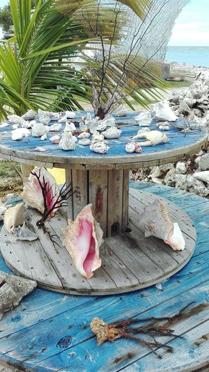 Protected nature in Bonaire Outdoors Beauty In Nature Bonaire Vacations Travel Destinations Nature Water Sea Beach Protected Treasures Shells🐚 Long Goodbye EyeEmNewHere