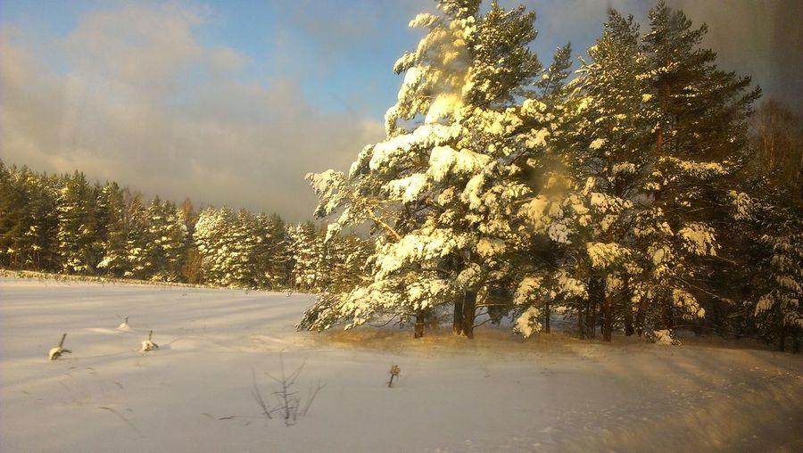 зимний пейзаж зимний пейзаж снежный лес зима снег лес и природа Tree Cold Temperature Snow Winter Sunset Rural Scene Mountain Sky Landscape