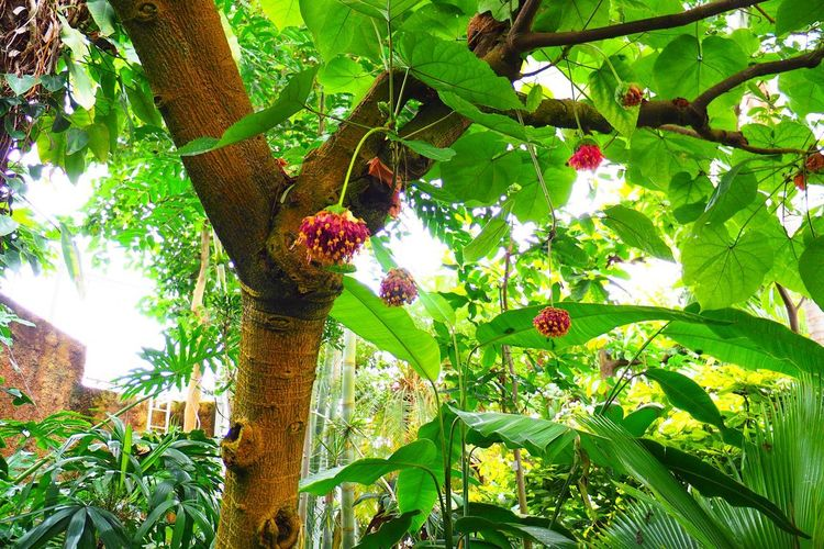 Low angle view of flowering plants on tree