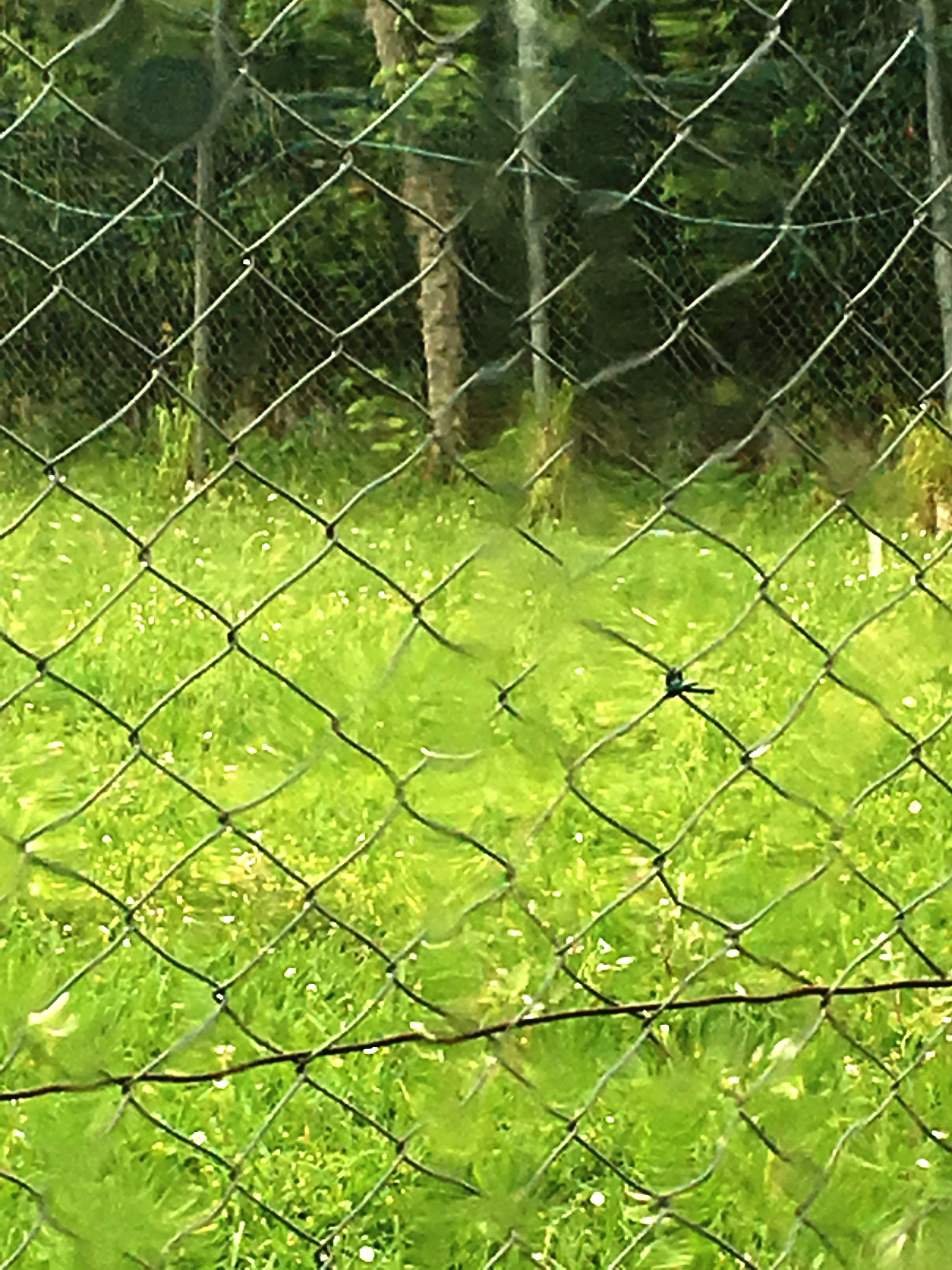 green color, outdoors, protection, day, soccer, full frame, nature, net - sports equipment, focus on foreground, no people, backgrounds, sport, close-up, soccer field, grass, playing field