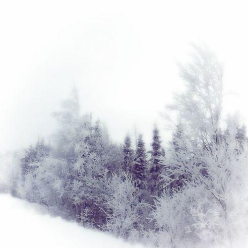 Winter❤ Snow Trees Snowonthetrees
