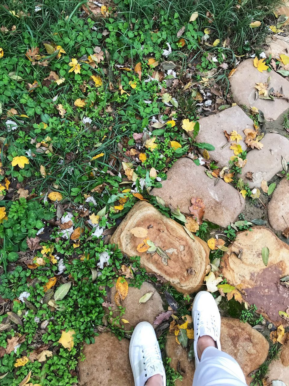low section, one person, human body part, personal perspective, real people, body part, human leg, high angle view, shoe, day, plant, land, lifestyles, nature, field, plant part, leaf, unrecognizable person, standing, outdoors, human foot, leaves, human limb