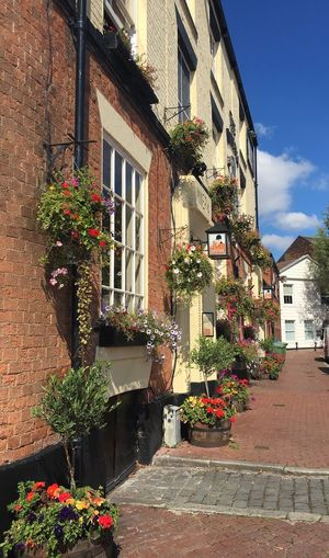 Flower Pub Hull City Of Culture 2017 Hull2017 GetAbsolutelyCultured Hull Marina Hull Old Town Old Building  Public House Traditional Pub Hanging Baskets