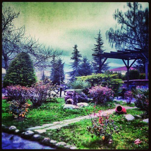 Orhangazi . Cafe Instagramt ürkiye. Instaturkey . instagood. view. bahçe garden photooftheday. park. gununkaresi. gununfotografi. hdr trees. sky ağaç
