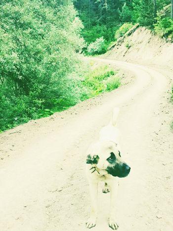 Hi! Taking Photos My Little Friends  Enjoying Life My Dogs Betty Mountain Hiking