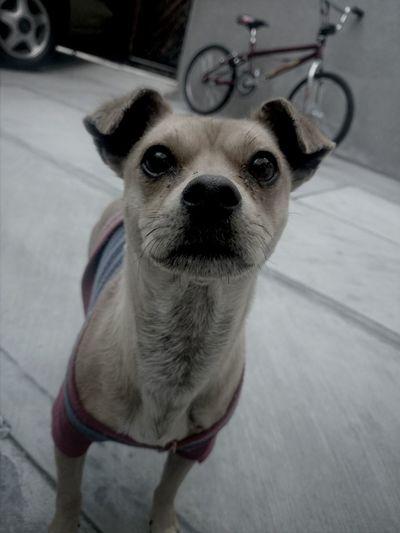 Dog Love ♥ Threeyearsago