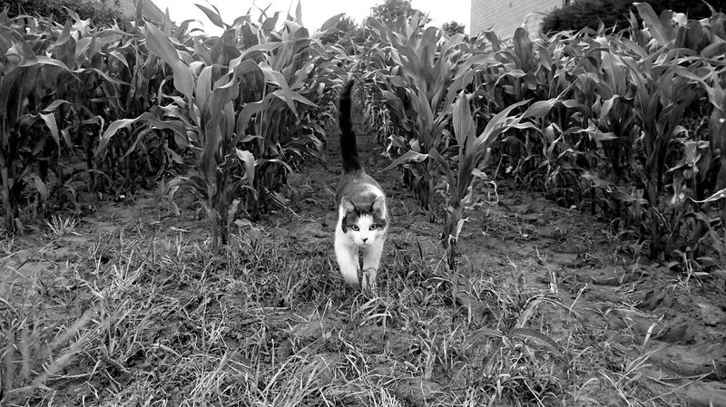 This beauty posed for me today! Cats Of EyeEm Cat Posing Animal Themes Nature Outdoors Cat Photography Catsoneyeem Cat Lovers Kitten Kittens Of Eyeem Beautiful Cat Animal_collection Posing Animals Summer Summer Vibes This Week On Eyeem EyeEm Best Shots - Black + White EyeEm Best Shots Pets Modeling Catwalking