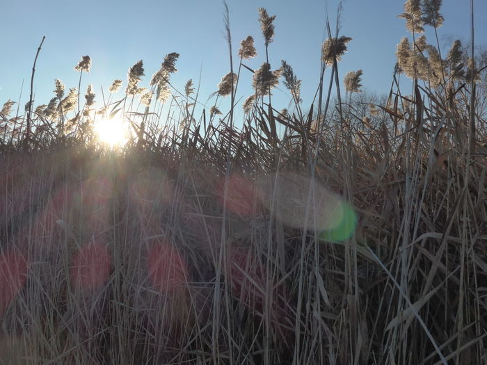 Beauty In Nature Bokeh Lights Looking Up At The Sky Reed Showing Imperfection Sunlight Worms Eye View Wormseyeview Sunlight Effect Sunrays Pattern