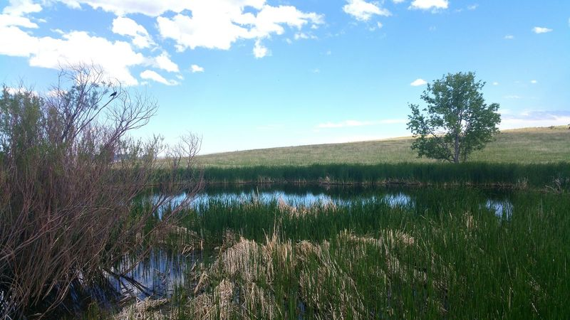 The Essence Of Summer Pond Water Hiking Nature Adventure Summer Outdoors