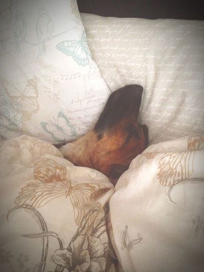 Sound Of Life Princeharry Sleepyhead Lazymorning