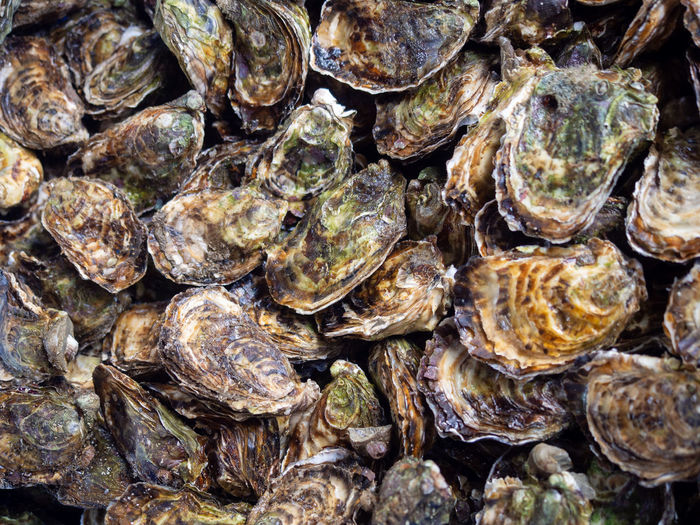 Food And Drink Food Arles France Provence Market Market Stall Farmer Market Farmers Market Seafood Shell Healthy Eating Oyster  Full Frame Animal Shell Directly Above Stall Fish Market Oyster  Clam