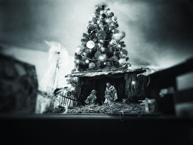 Indoors  Christmas No People Window Tree Close-up Shadow Christmas Decoration Day