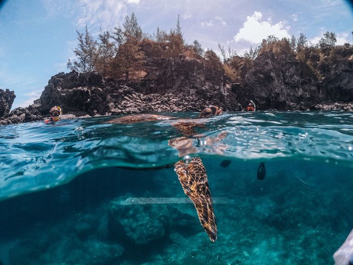 View of turtle swimming in sea