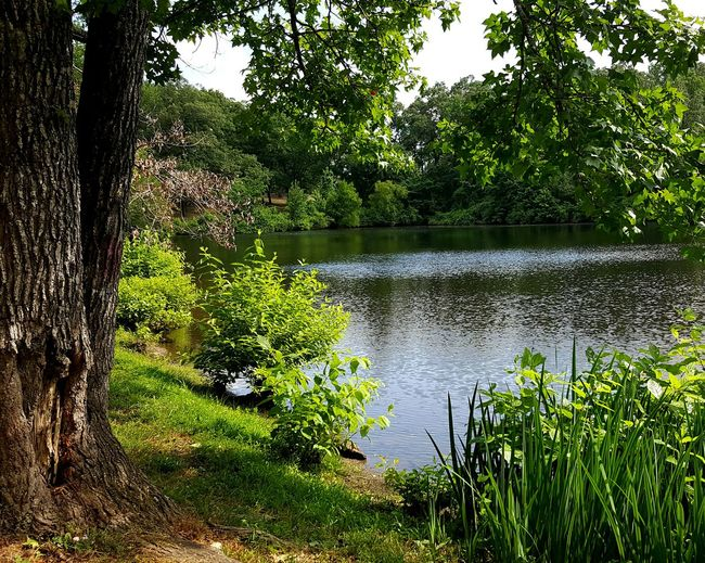 Take That to The Bank. Enjoying Life Peaceful View Peaceful And Serene Summer Afternoon EyeEm Best Shots - Nature Pond Small Lake Forest, Lake And Clouds My Walden Pond Bank Of A Lake Fishing Hole The Great Outdoors - 2017 EyeEm Awards