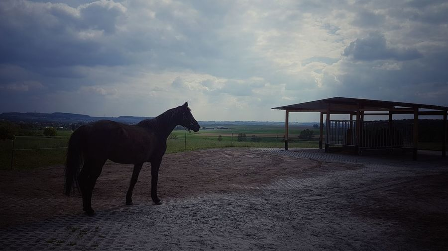view View Sky Nature Enjoying The View Enjoying Nature Nature Photography Focusobject Animal Beautiful Focus On Details Agriculture Sky Cloud - Sky Landscape Ranch Horse Paddock