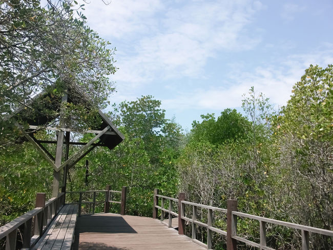 Architecture Beauty In Nature Bride Bridge Day Green Color Growth Mangroove Mangrooves Mangrove Mangrove Forest Mangrove Forests Mangrove Life Mangrove Plant Mangrove Swamp Mangrove Trees Mangroveplant Mangroves Nature No People Outdoors Railing Sky Tranquility Tree