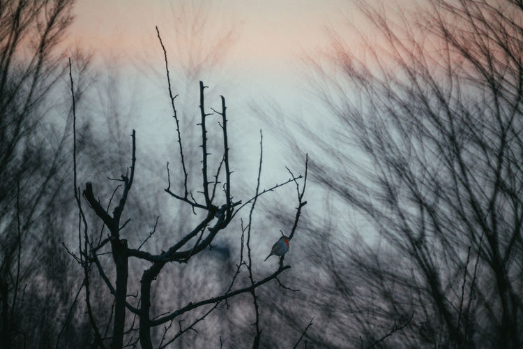 Close-up of silhouette bare trees against sky