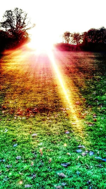 Colorful sunset Sunlight Grass Sunset Sun Nature Outdoors Tree Sunbeam Beauty In Nature No People Day Sky Autumn Vibrant Color Sunlight Creativity HRD Effects