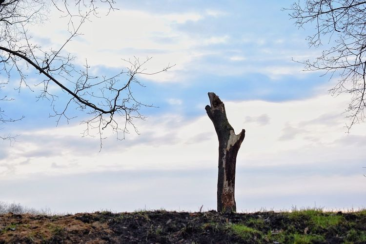 Sky Outdoors Nature Bare Tree Tree Landscape Field Day No People Cloud - Sky Beauty In Nature Dead Tree Nature Beauty In Nature Nature Photography Park Sky And Clouds