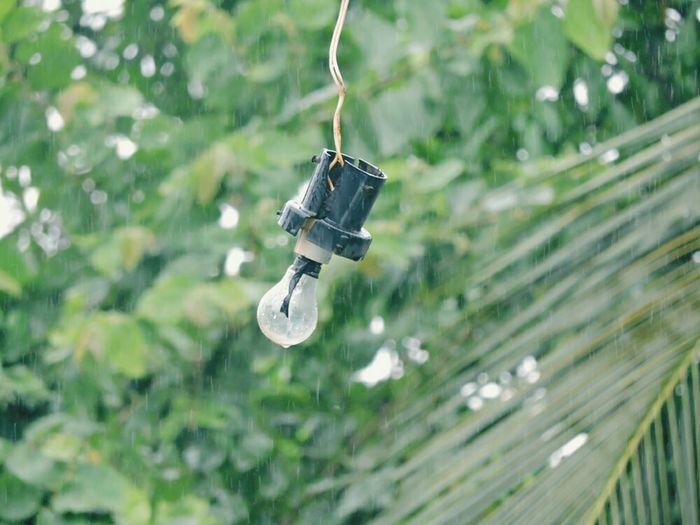 Light Bulb During Rains
