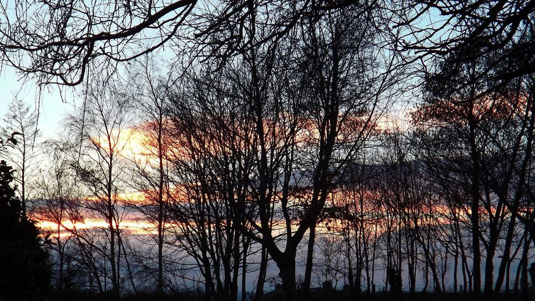 Beauty In Nature Colours EyeEm Gallery EyeEm Nature Lover Good Night Ireland Nature Orange Color Outdoors Silhouette Sky Sunset The Night Is Coming. Tranquil Scene Tranquility Tree