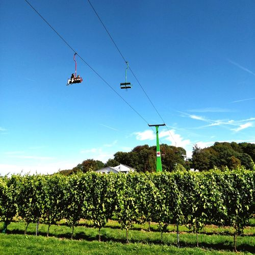 Vineyard cable ride