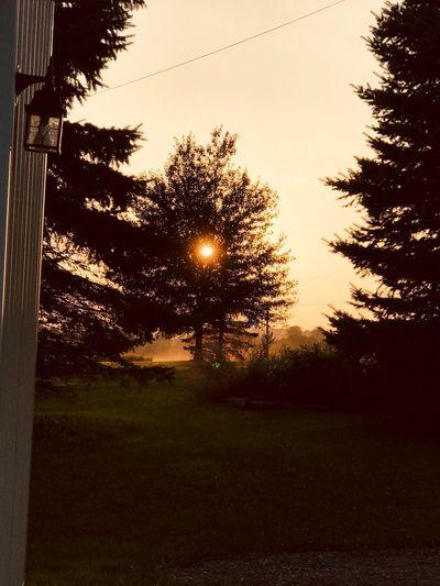 Summer mist...