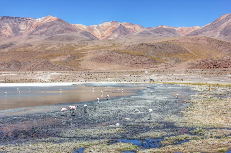 Arid Climate Beauty In Nature Blue Bolivia Clear Sky Day Desert Idyllic Landscape Landscapes With WhiteWall Mountain Mountain Range Nature Non-urban Scene Outdoors Physical Geography Remote Salar De Uyuni Sand Scenics Sunlight Tranquil Scene Tranquility