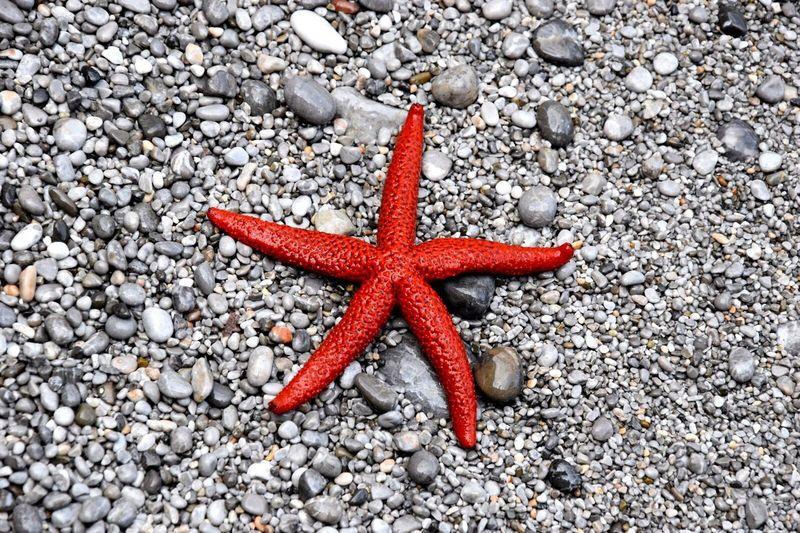 Igers Seaside Sea Mare Sea Life Fish Cool Star Beautiful Nature Taking Photos Love Photography Landscape_photography Stellamarina