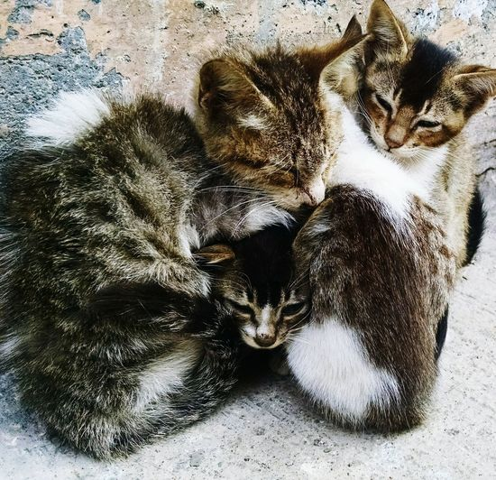 cuddling kittens What More About To Say Speechless