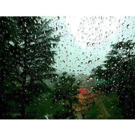 Rainy Day Dharamshala Hometown Himachalpradesh XPERIA Ourplanetisbeautiful Mcleod Natureporn India_ig Drops AfterShower Nofilter Beautiful Mothernature Window Greenery Glass Naturegram NaturalBeauty Minimalism