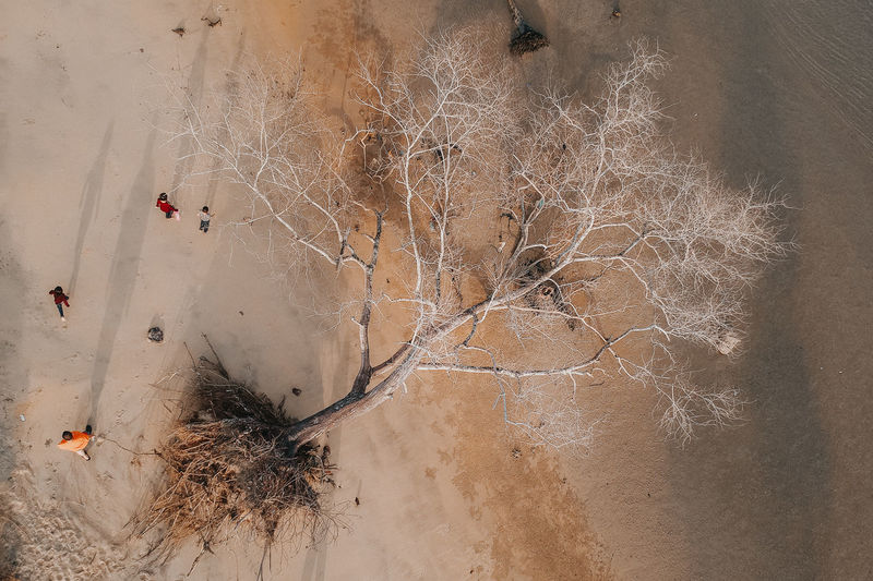 the death of tree aerial view Tree High Angle View Nature Land Cold Temperature Day Bare Tree Plant No People Winter Outdoors Branch Snow Scenics - Nature Tranquility Non-urban Scene Water Dry