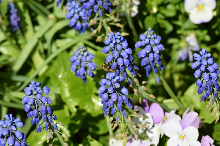 Flower Purple Nature Beauty In Nature Fragility Freshness Growth Plant Close-up Day No People Outdoors Flower Head