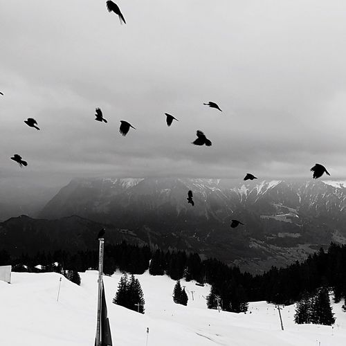 Lostinmemories Blackandwhite Rabe Animal Themes Mountain No People Day Outdoors Sky Tranquil Scene Scenics Bird Beauty In Nature Weather Flying Cold Temperature Snow Winter Nature