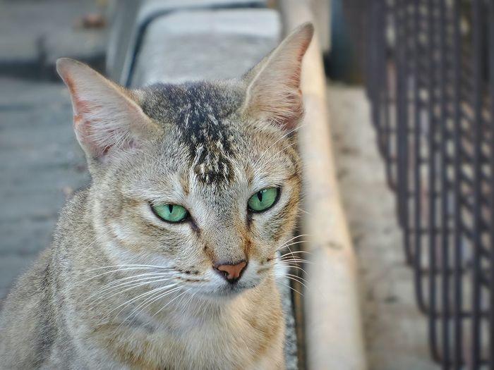 Hi! ☺ Taking Photos Check This Out Cat Eyes Cat♡ Green Eyes EyeEm Nature Lover Eye4photography  Faces Of EyeEm Pets Corner