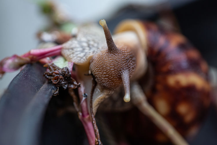 Close-up of snail on dry leaf