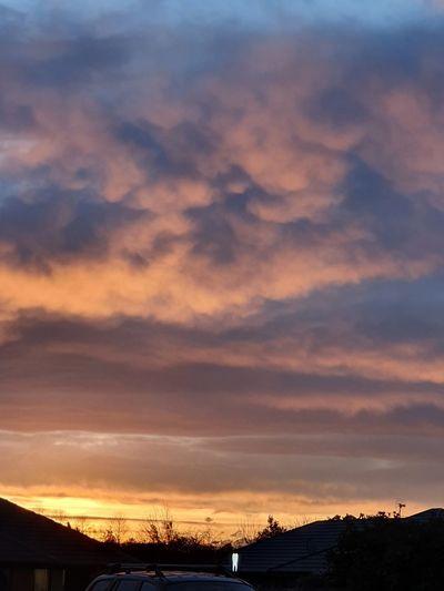 NZ sky Tree